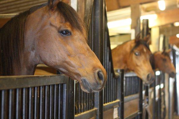 Лошади в загонах
